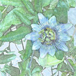 bloemen-van-de-mond