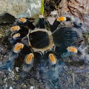 Spinnend web